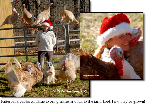 Butterball's babies continue to bring smiles and fun to the farm Look how they've grown!